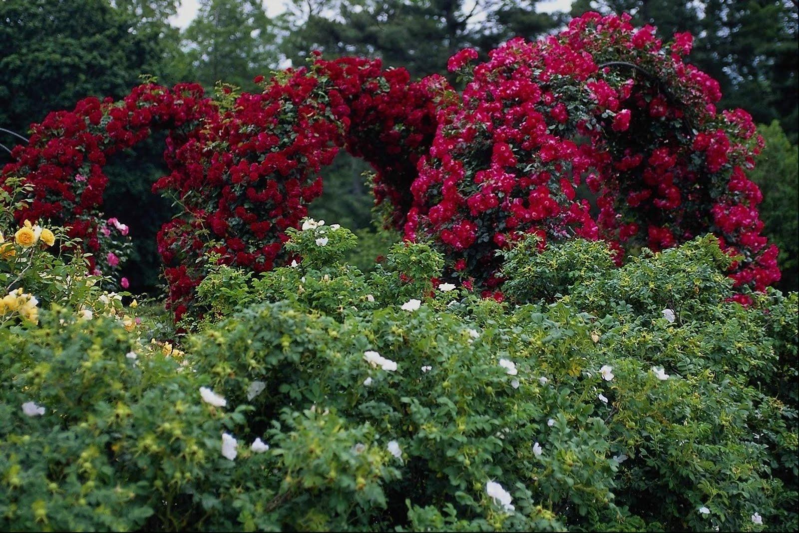 SUN SHINES Beautiful Flower Garden Wallpapers 1600x1067