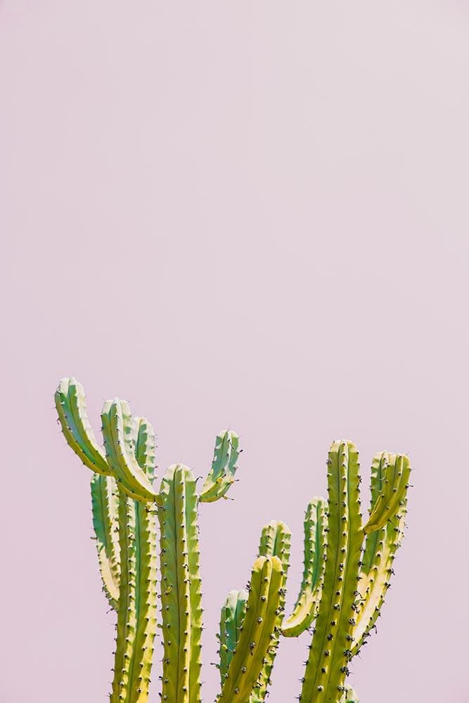 Pink Cactus in 2019 Powerpoint background design Cool 667x1000