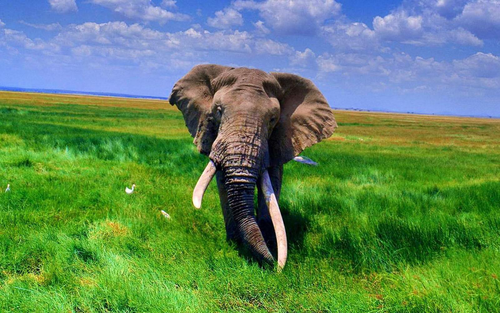 45+ Elephant Wallpaper for Desktop on WallpaperSafari