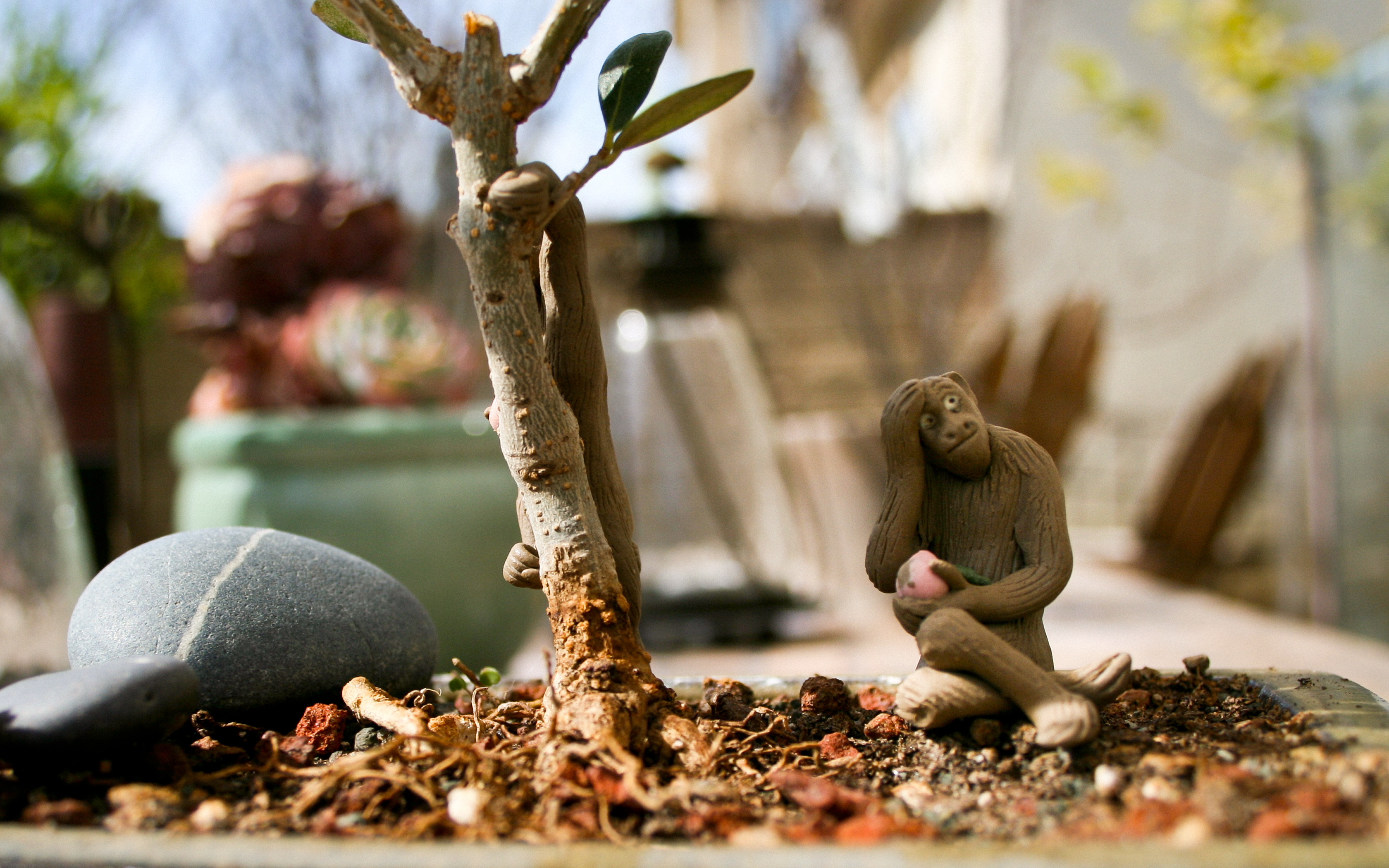 Bonsai Olive Tree Monkey Background Wallpaper by Terry 3360x2100