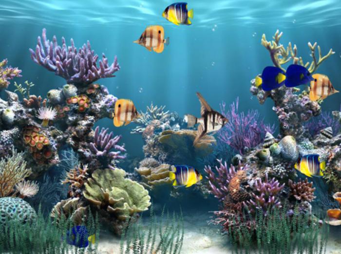 Aquarium Animated Wallpaper   Download 700x522