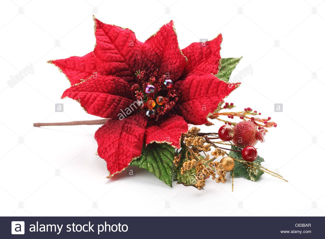 Christmas flower poinsettia isolated on white background Stock 1300x956