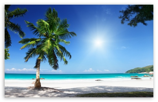 Download Sunny Beach wallpaper 510x330