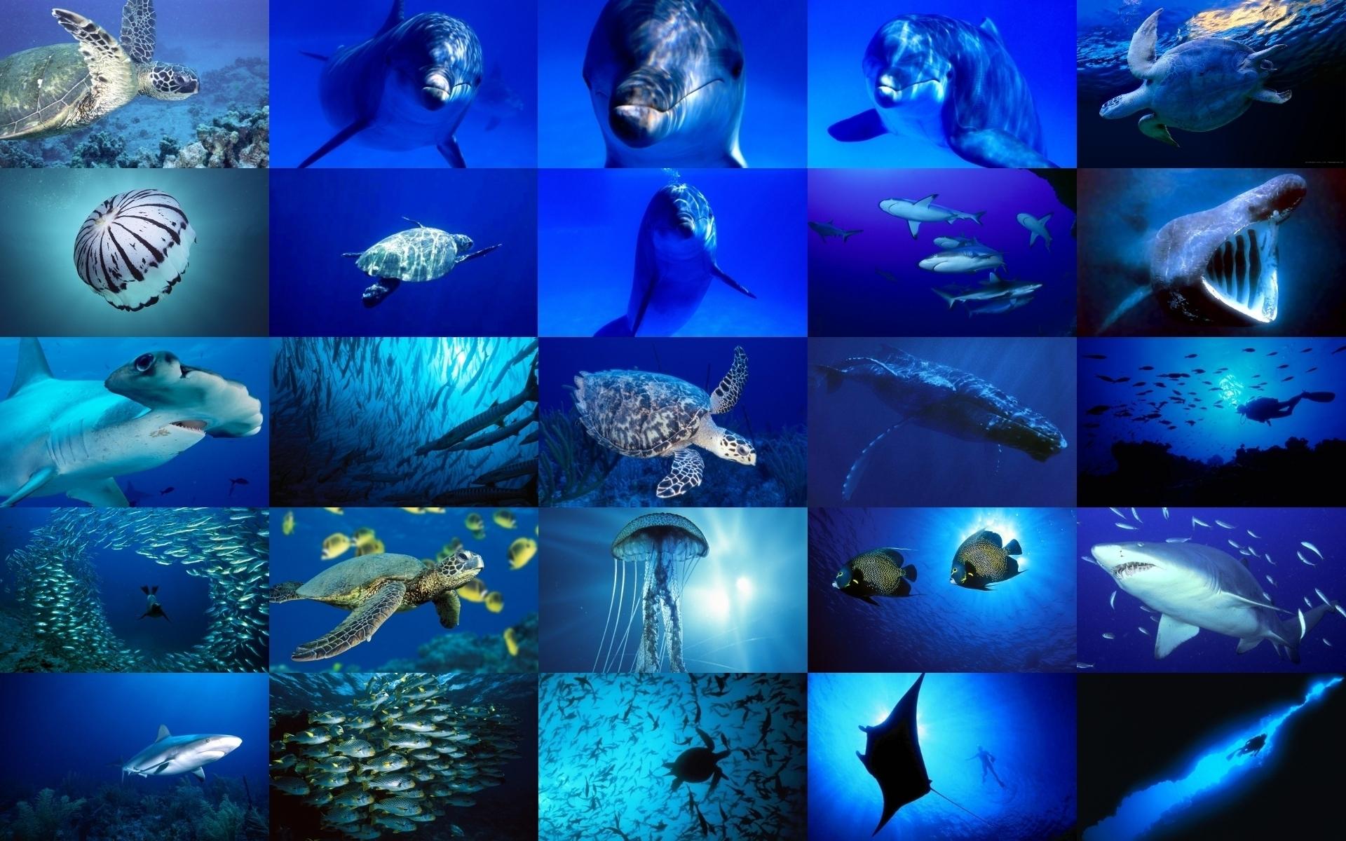 Sea Life images Sea Life wallpaper photos 18272263 1920x1200
