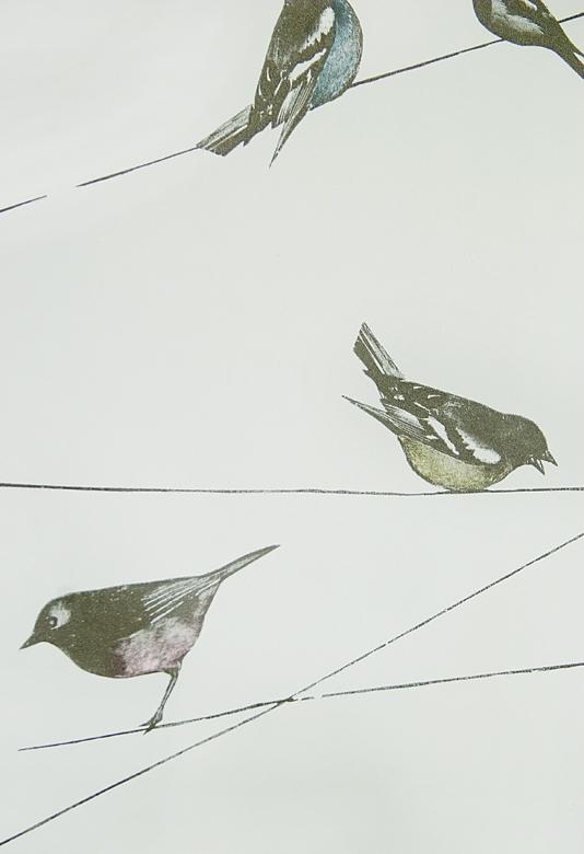 blue wallpaper with interesting black illustrated garden birds design 534x780