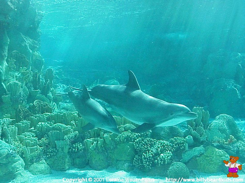 Dolphin Desktop Wallpaper Desktop wallpaper dolphin 800x600