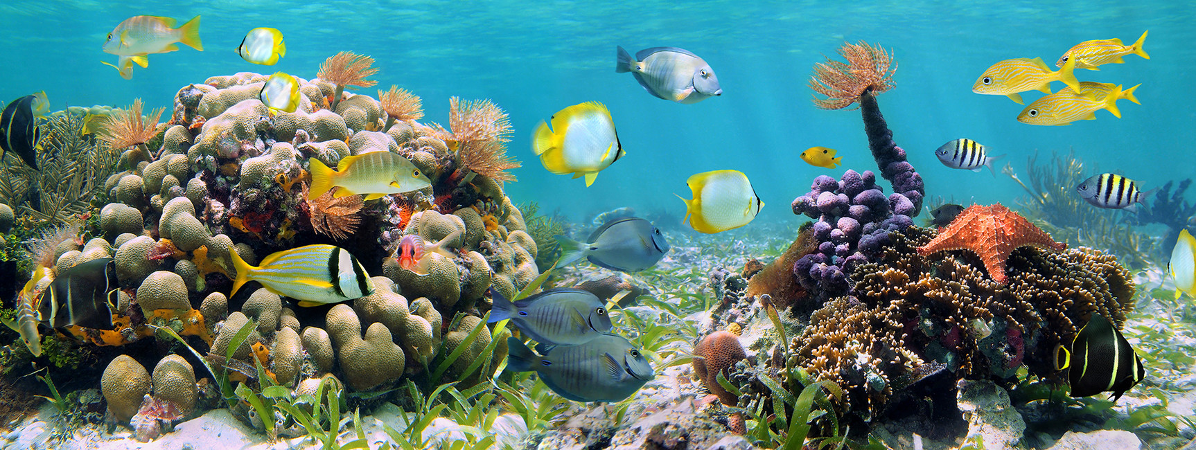 Panorama Coral Reef   Wall Mural Photo Wallpaper   Photowall 1726x650