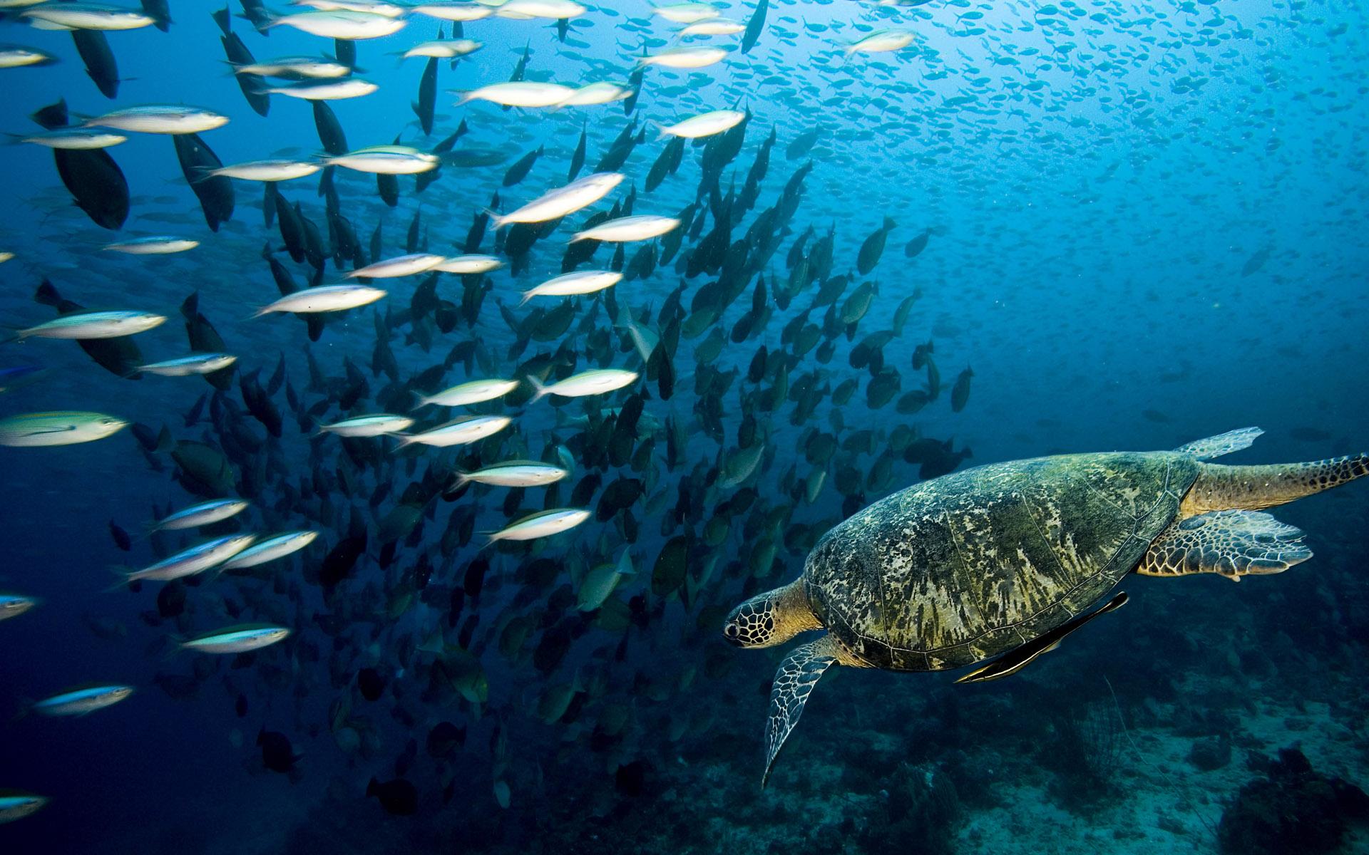 Marine life Desktop wallpapers 1920x1200 1920x1200