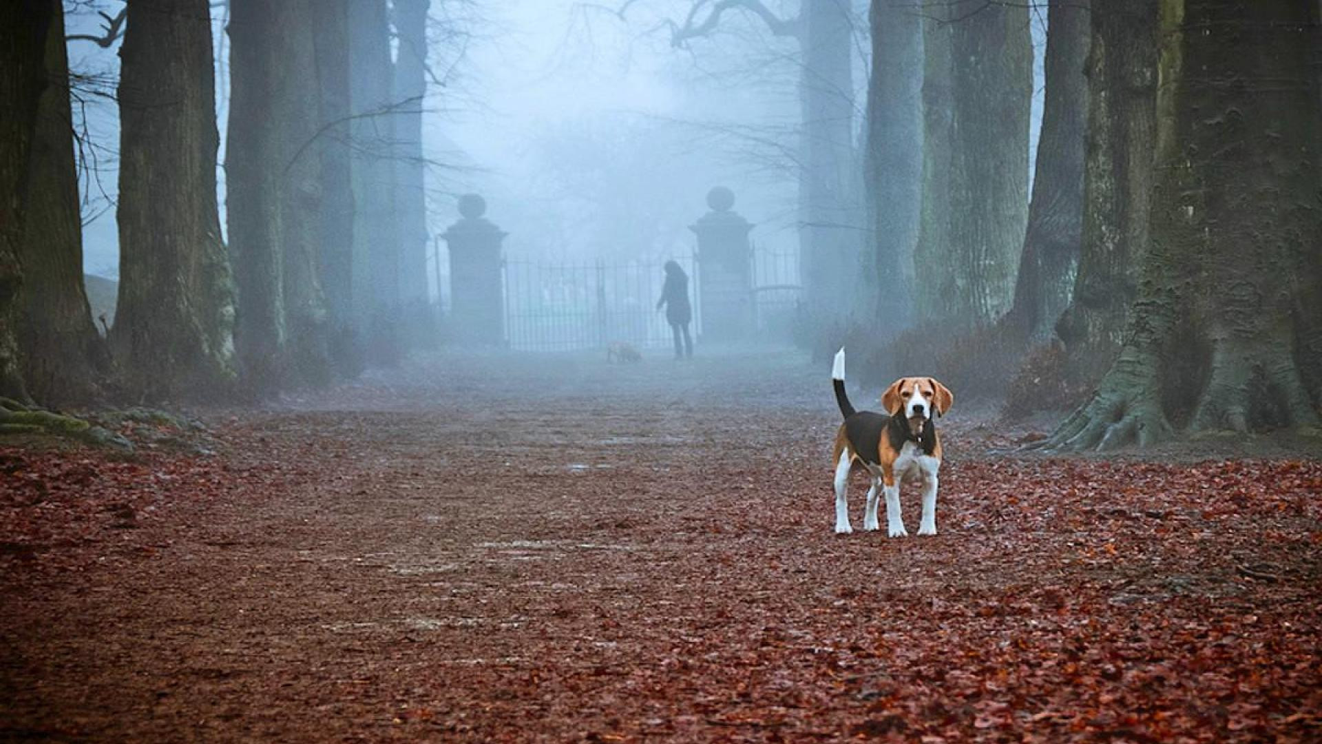 Dogs And Puppies Wallpaper Beagle Screen Wallpape...