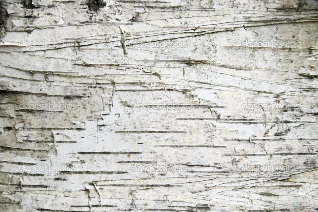Birch Bark Wallpaper Birch bark background   stock 1023x682