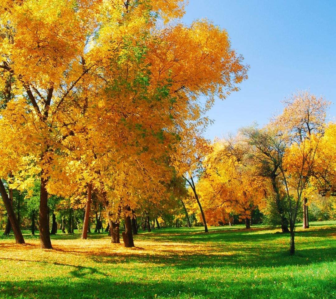Autumn Screensavers And Wallpaper