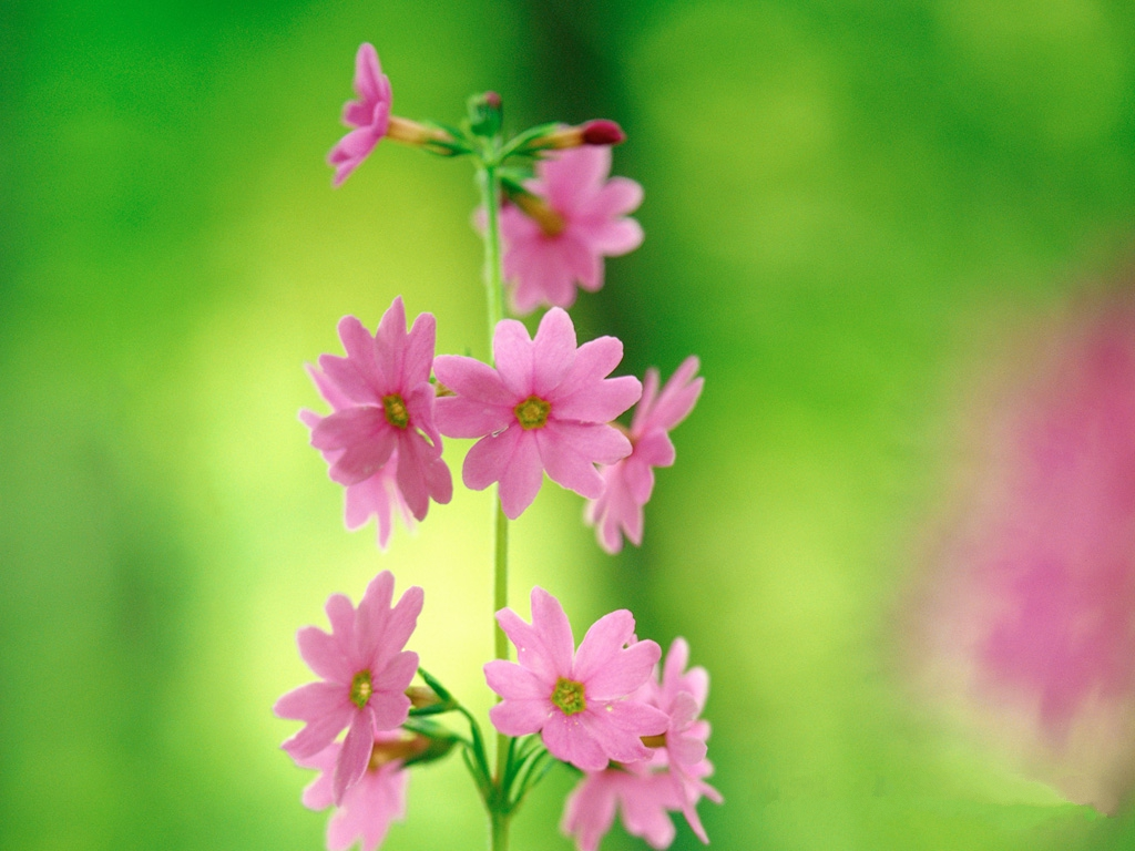 Pink And Green Flowers Pink flower wallpaper little 1024x768