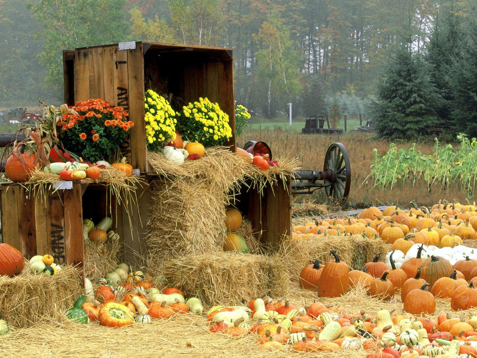 Fall Themed Wallpapers Desktop 1600x1200