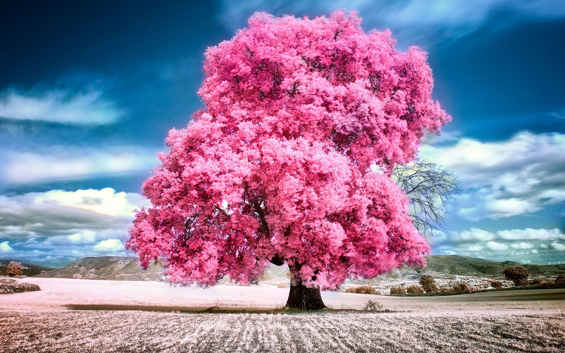 Sky clouds pink summer beauty beautiful tree nature 1920x1200