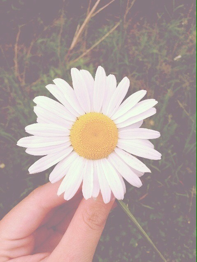 daisy flowers wallpaper Tumblr 400x532
