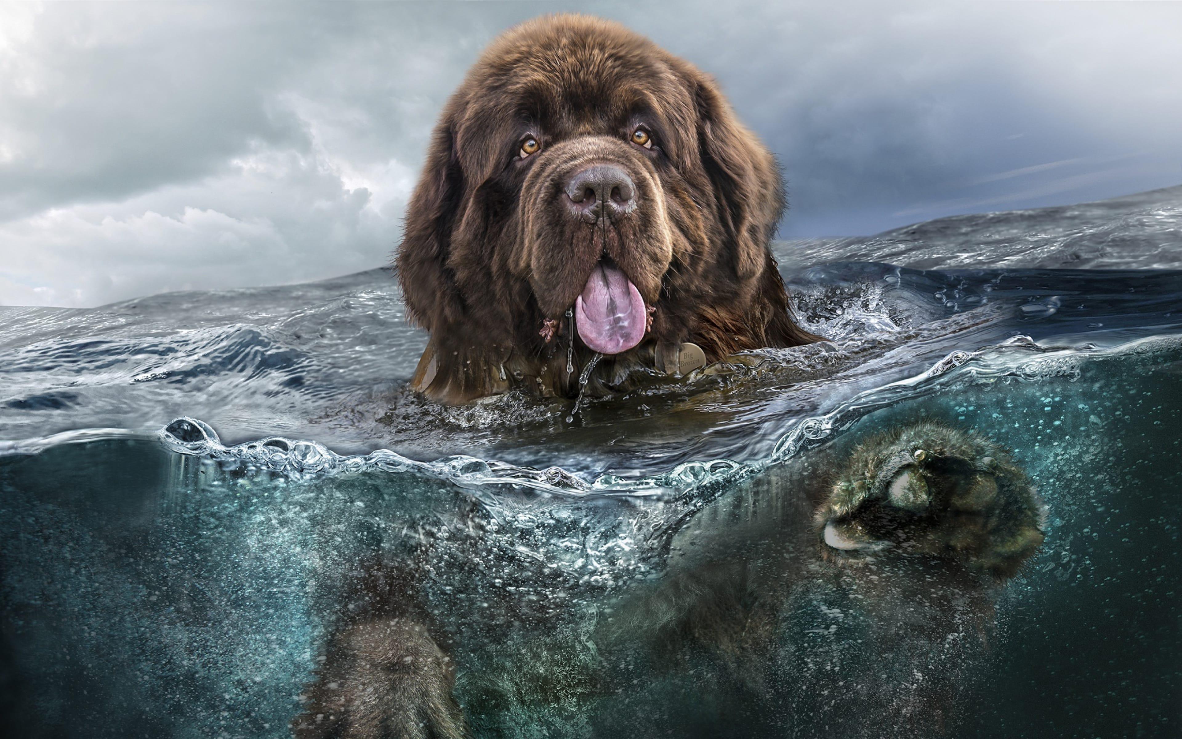 65 Dog Breeds Desktop Wallpapers   Download at WallpaperBro 3840x2400