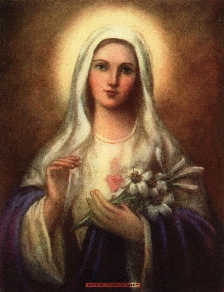 17 Best images about Our Blessed Lady Immaculate Heart on 736x959