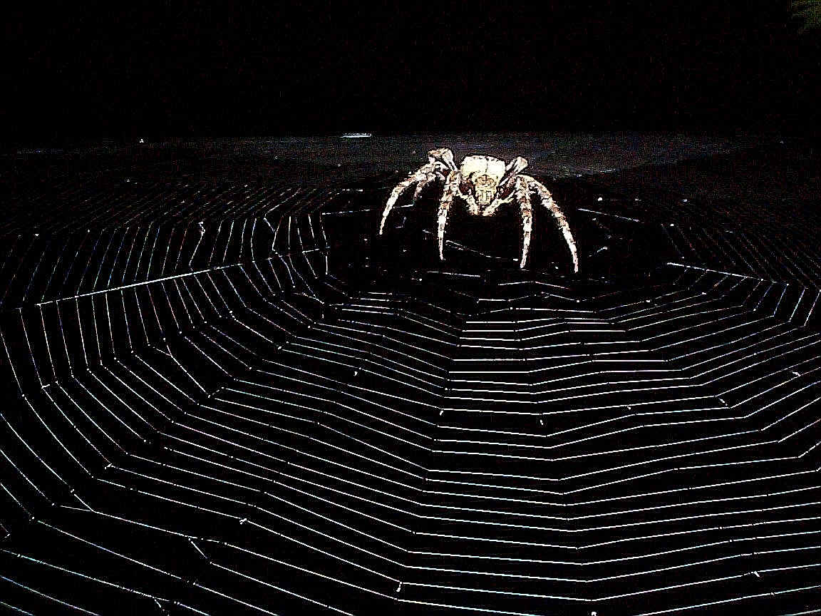 Spider Wallpapers 1152x864