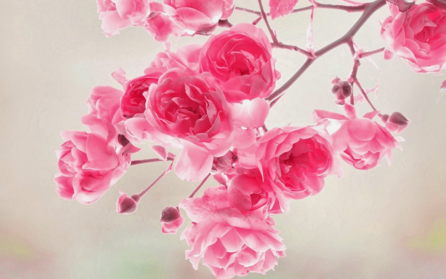 Free Download Spring Hd Cute Wallpapers For Desktop Pc Hd