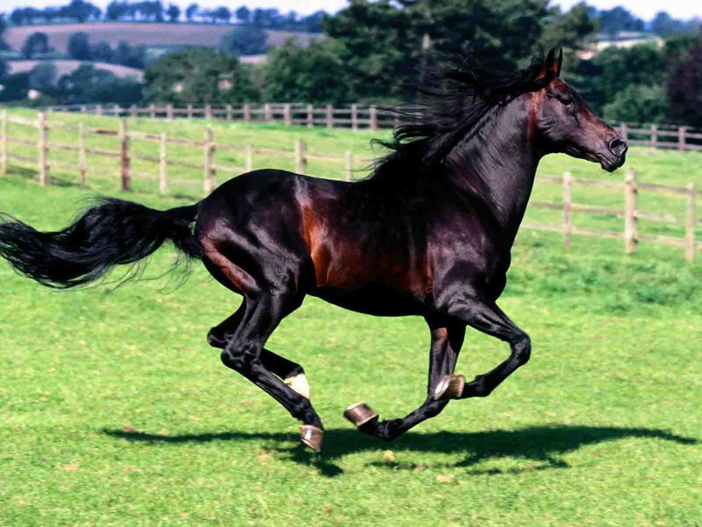 free horse screensavers and - photo #30