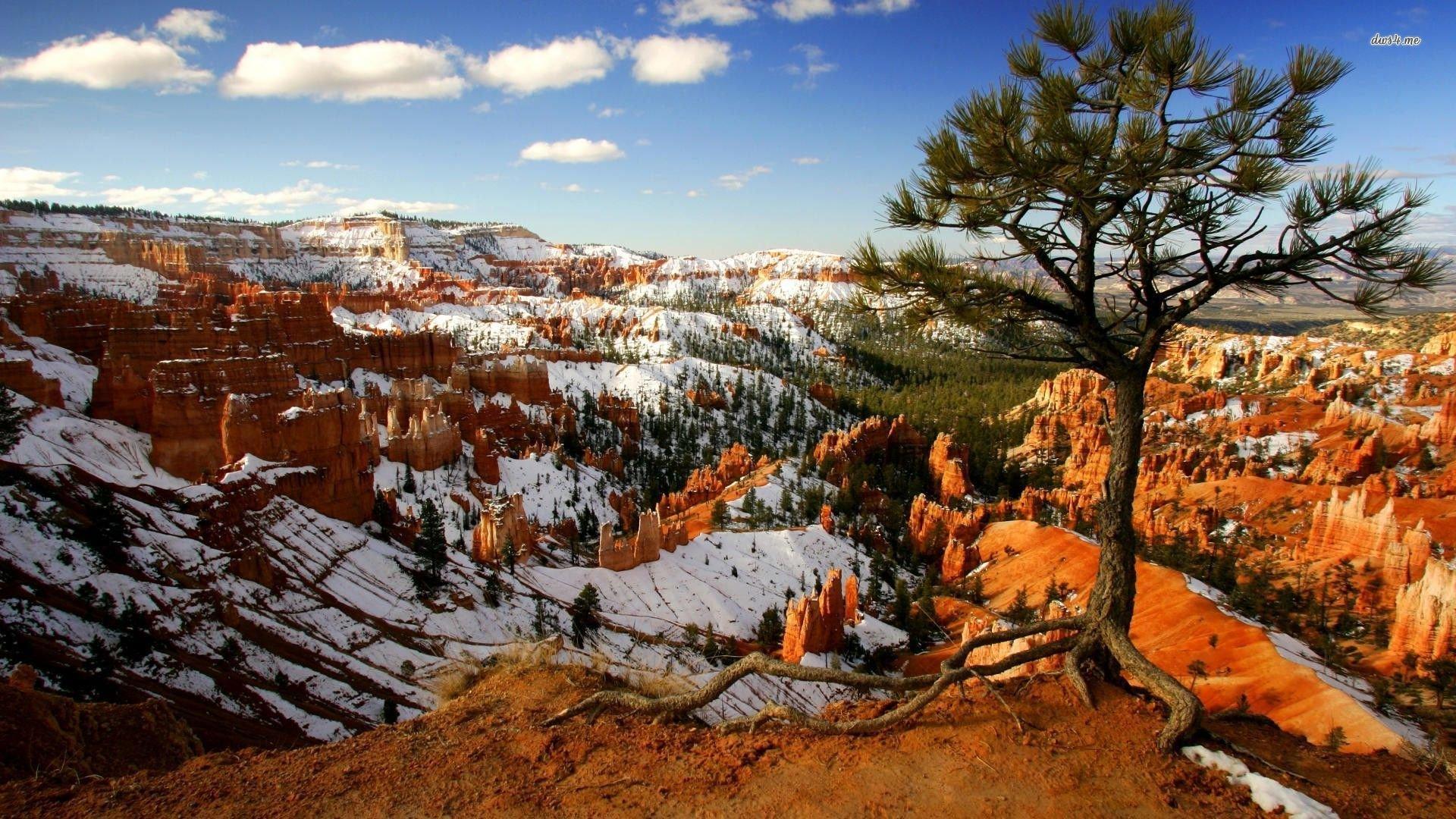 48 Bryce Canyon National Park Wallpapers On Wallpapersafari