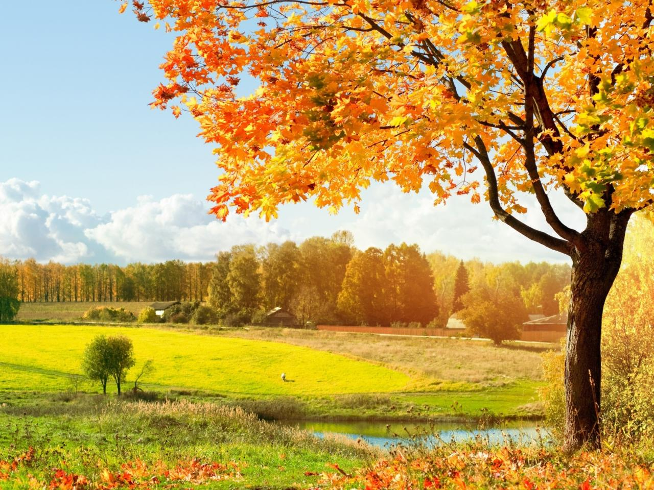 Autumn HD Wallpapers   HD Wallpapers 1280x960