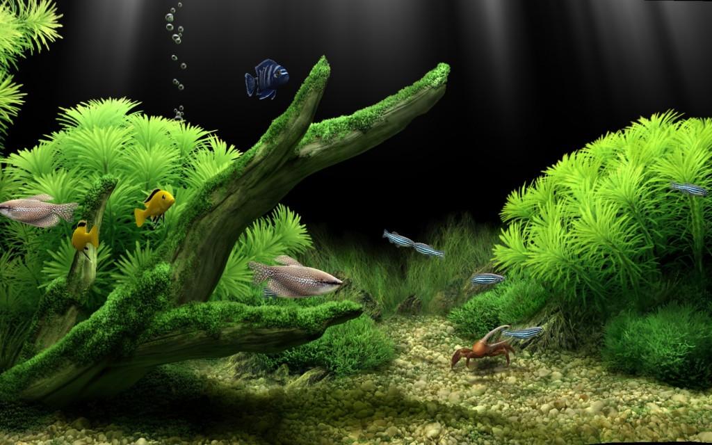 dream aquarium screensaver full version free