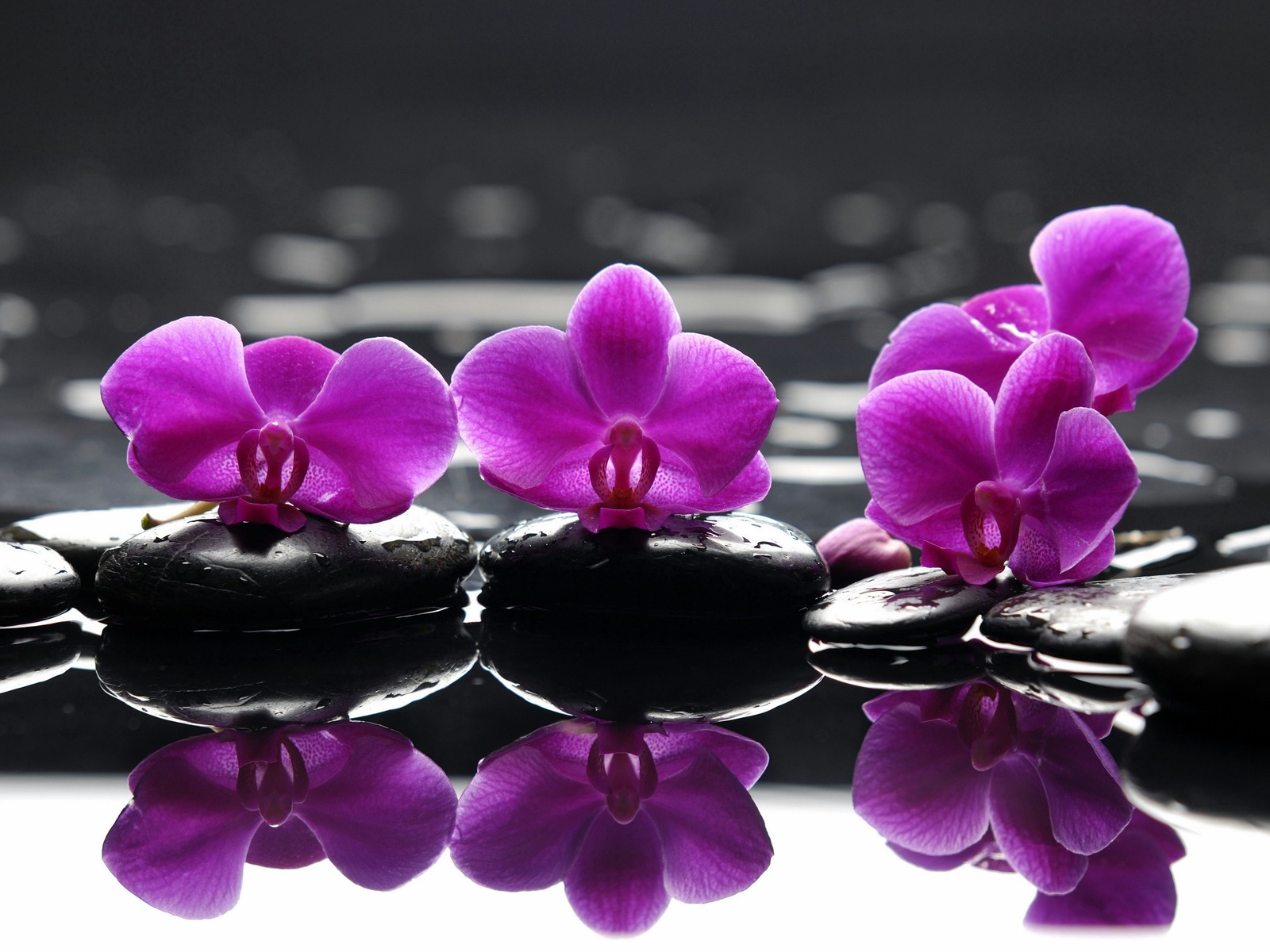 spa wallpaper purple flowers spa stones purple flower droplets 1600x1200