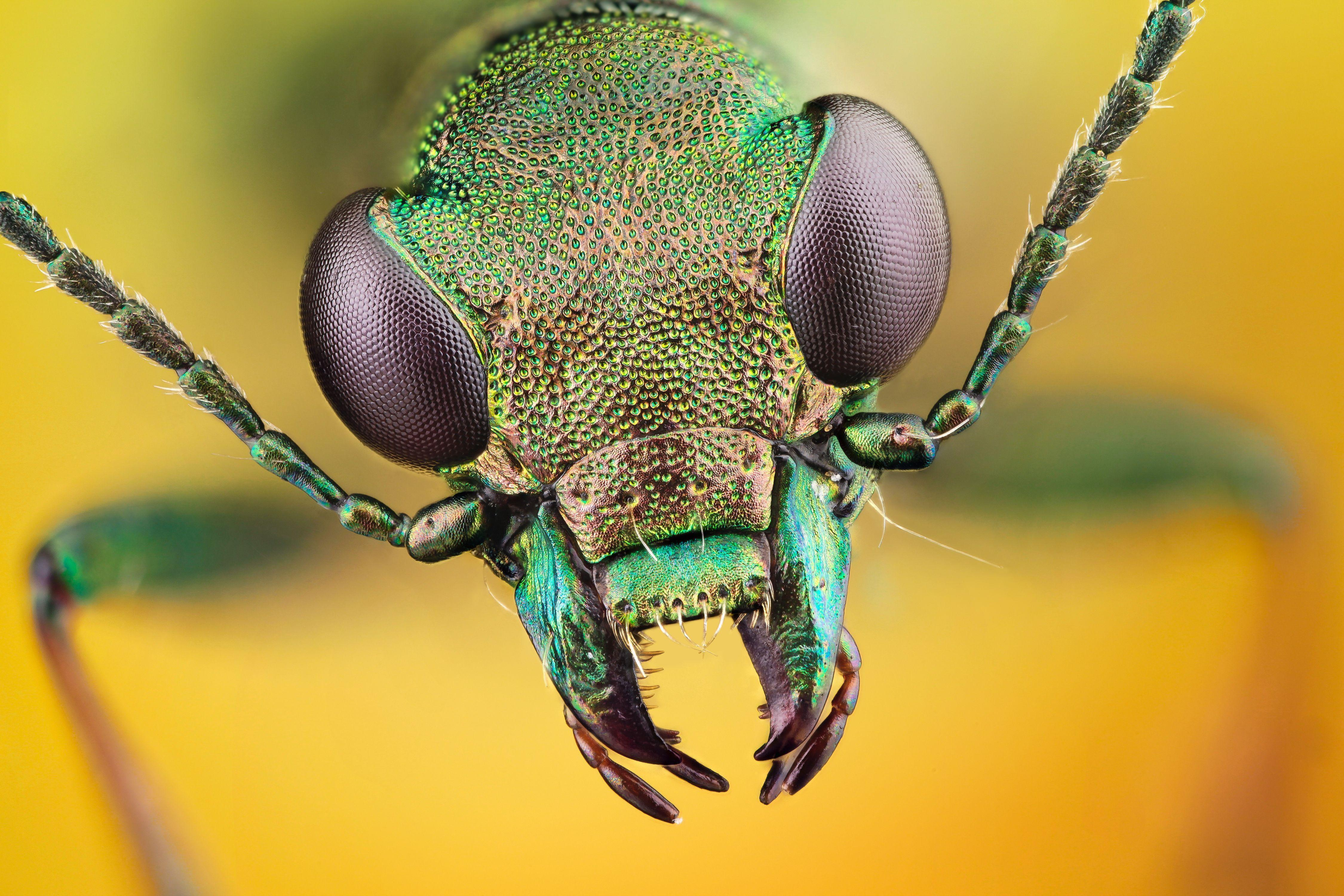 HD Insect Wallpapers   Top HD Insect Backgrounds 4500x3000