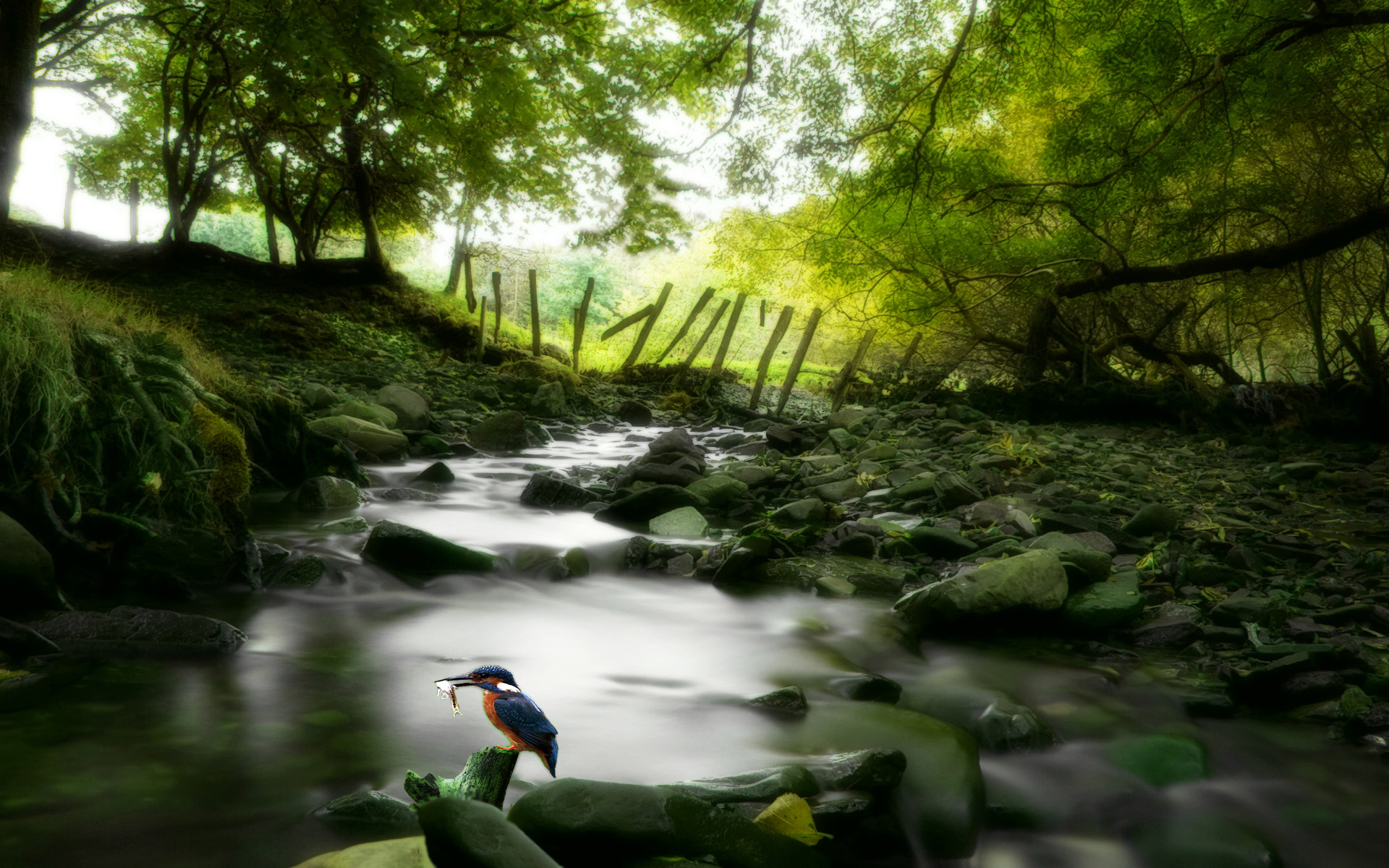 nature wallpaper forest stream stage desktop 1920x1200