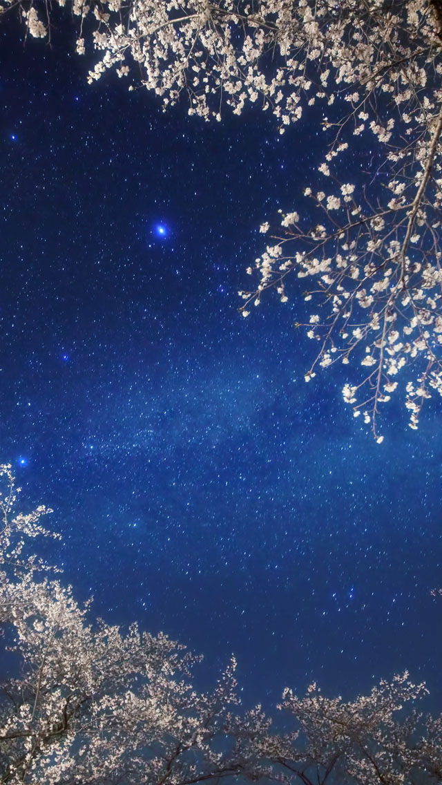 Cherry Blossom Galaxy Wallpaper   iPhone Wallpapers 640x1136