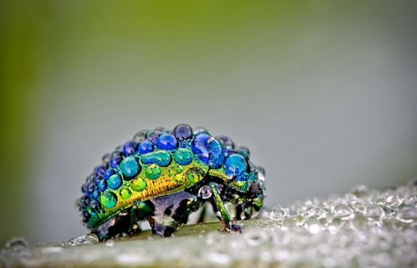 insects covered in dew   Bing Images Photography Pinterest 600x385
