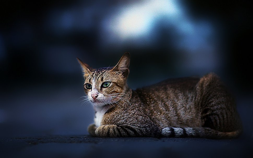 Awesome cat wallpaper wallpapersafari - Cool backgrounds of cats ...