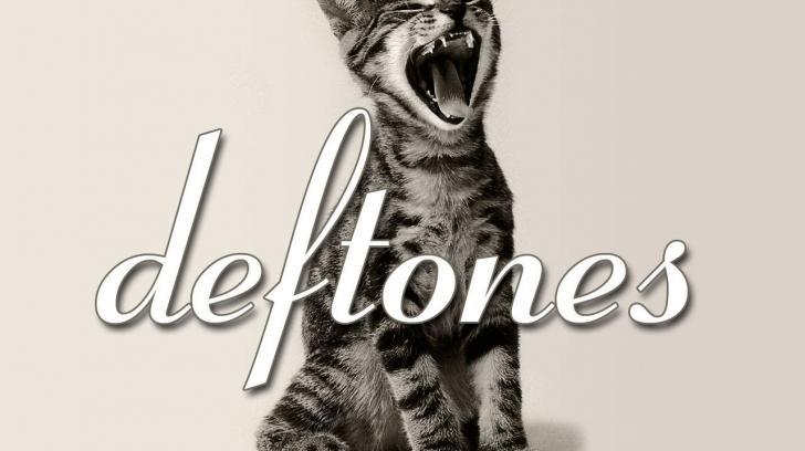 Deftones screaming catkiiiiiiiityyyyyy deftonescat wallpaper   6083 728x408