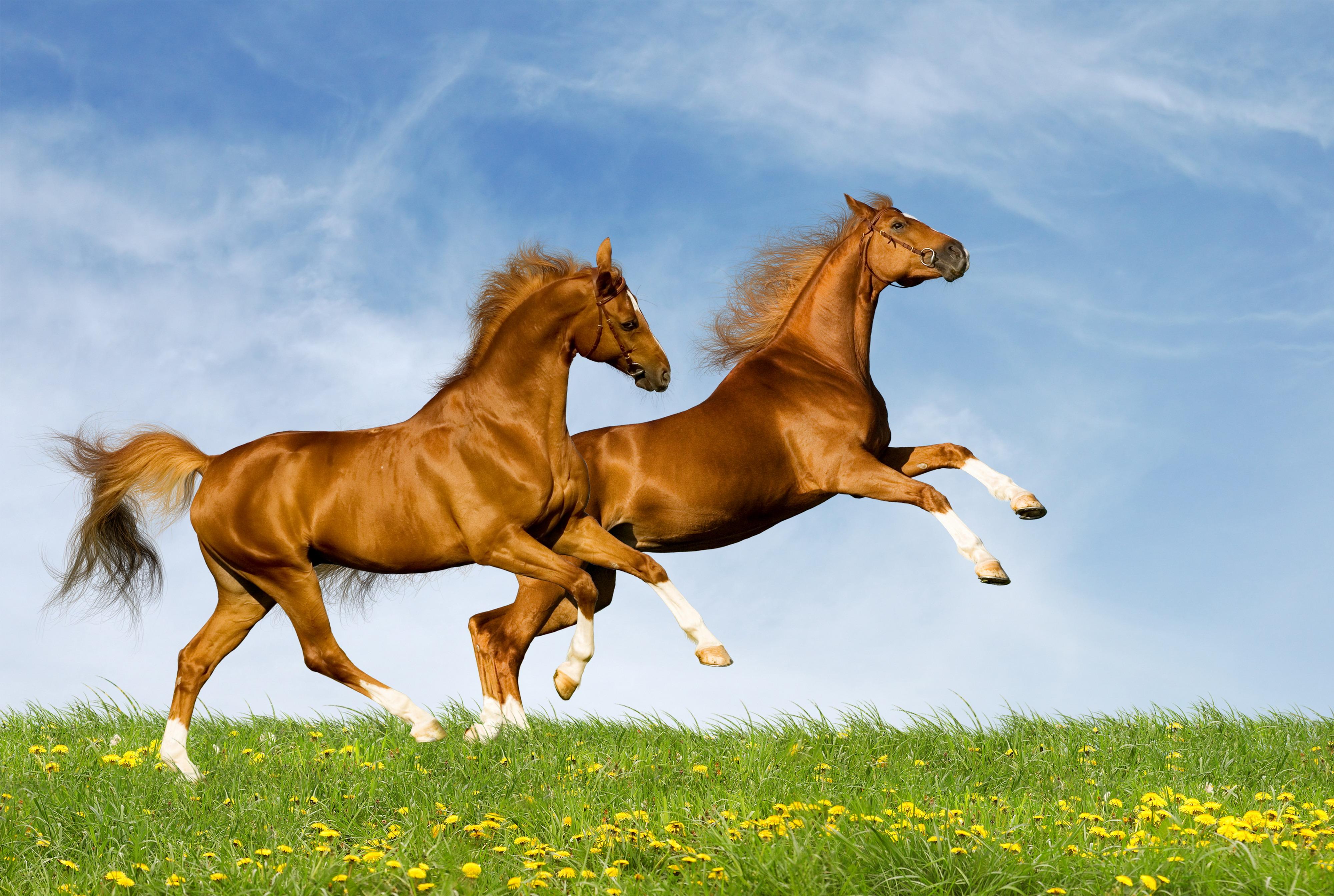 Обои на рабочий стол лошади на весь экран бесплатно