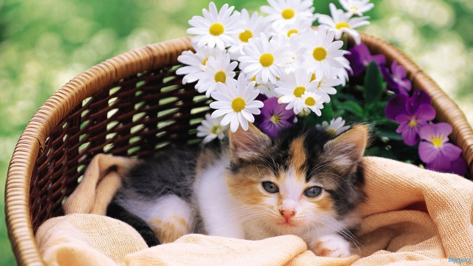 Download Cat And Flower In Basket Wallpaper HQ Backgrounds HD 1600x900