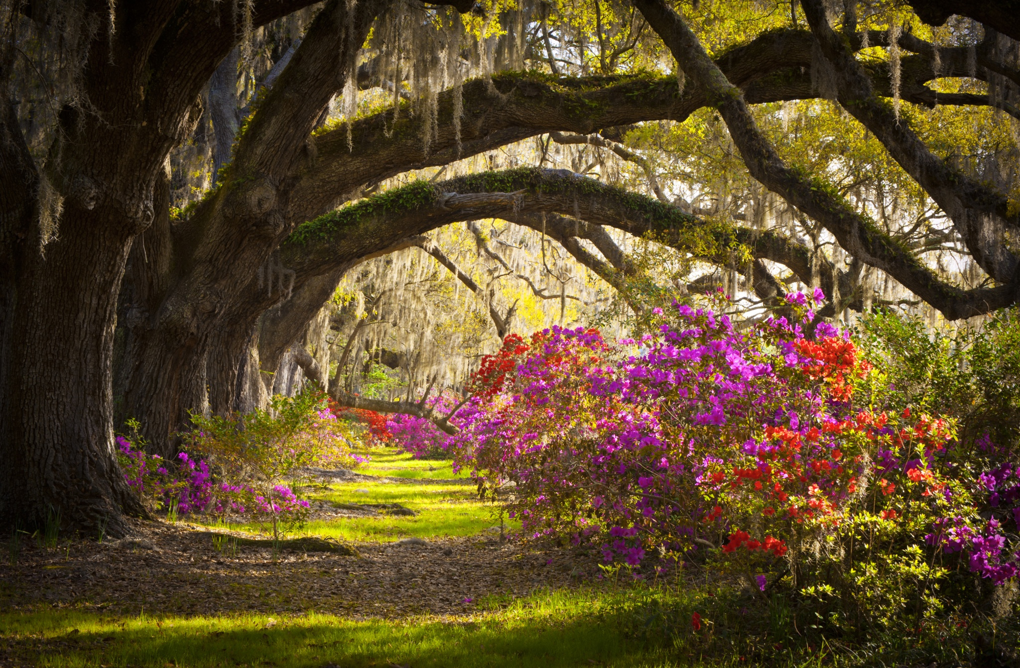 Earth Magnolia Tree South Carolina Azalea Flower Landscape Charleston 2048x1342