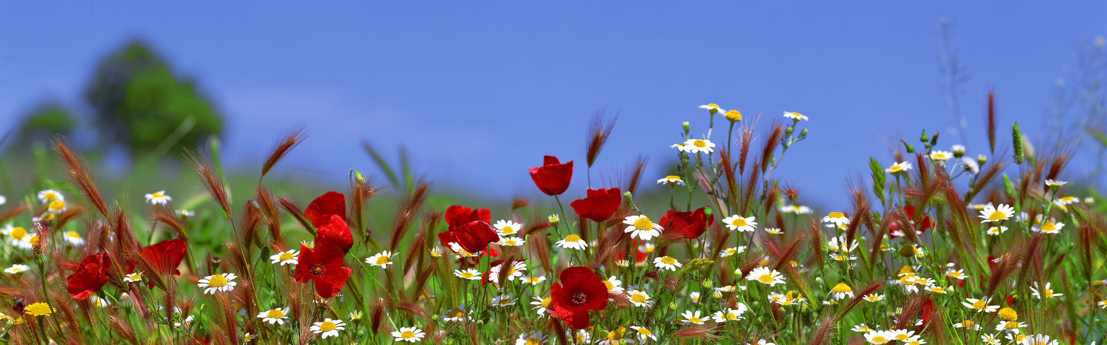 Flower Landscape Wallpaper - WallpaperSafari