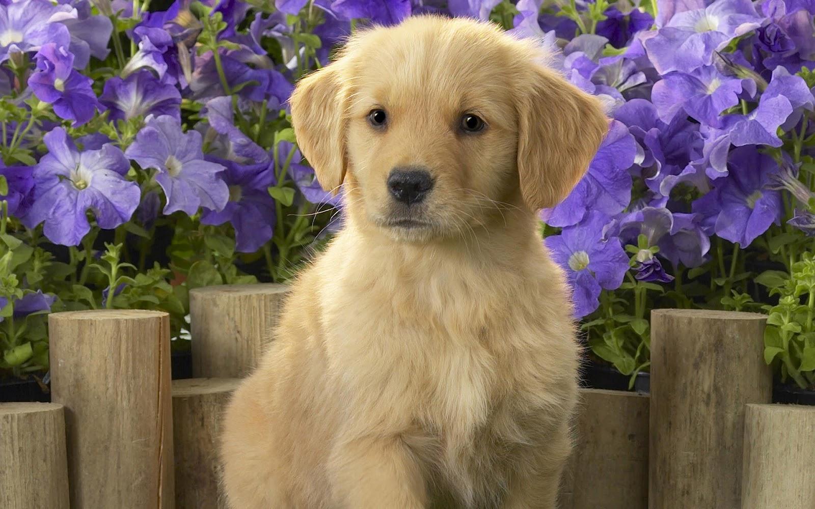 48] Cute Puppy Wallpaper HD on WallpaperSafari 1600x1000