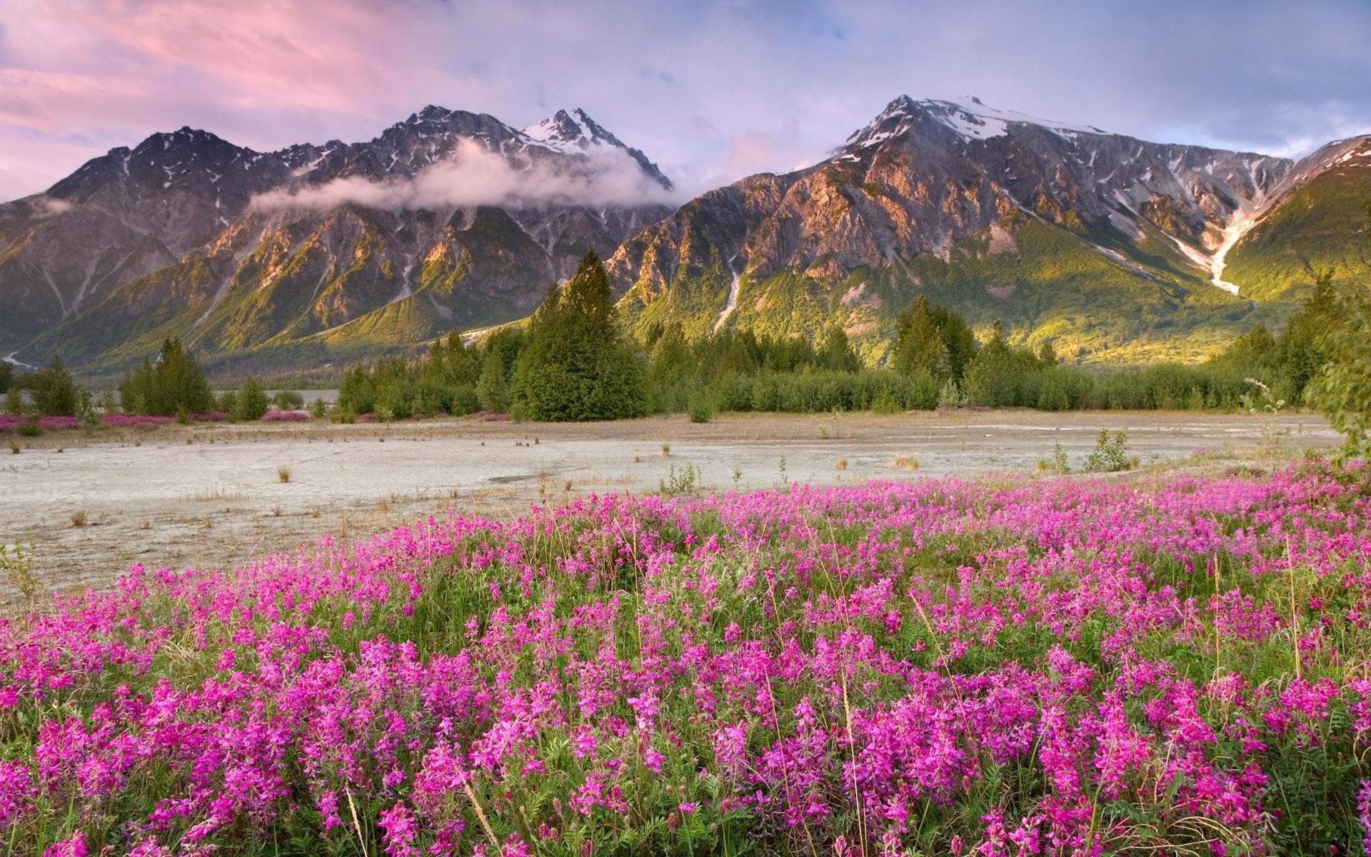 71 Free Spring Background Images On Wallpapersafari