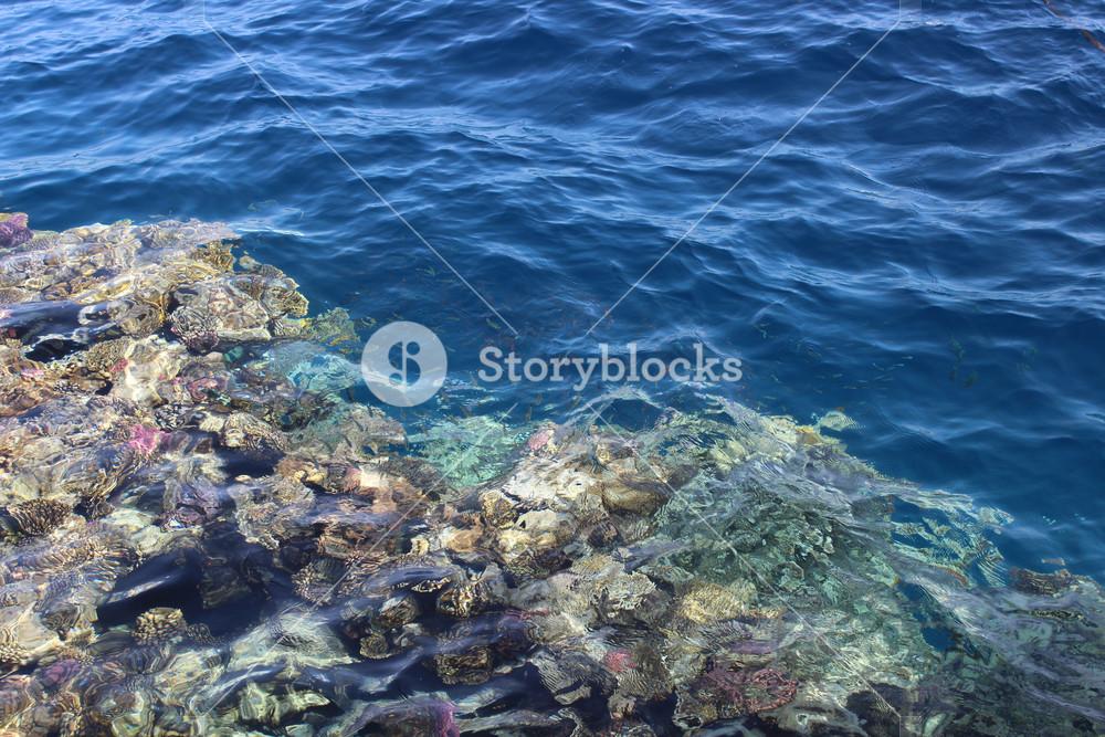 Beautiful seabed background gorgeous sea bottom through 1000x667