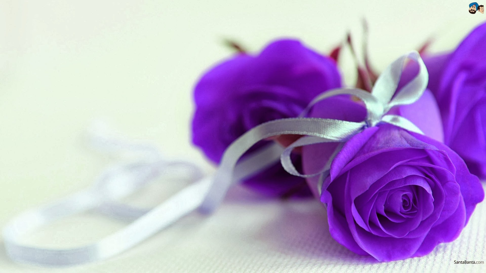Purple Roses Background Images: Purple And Silver Wallpaper