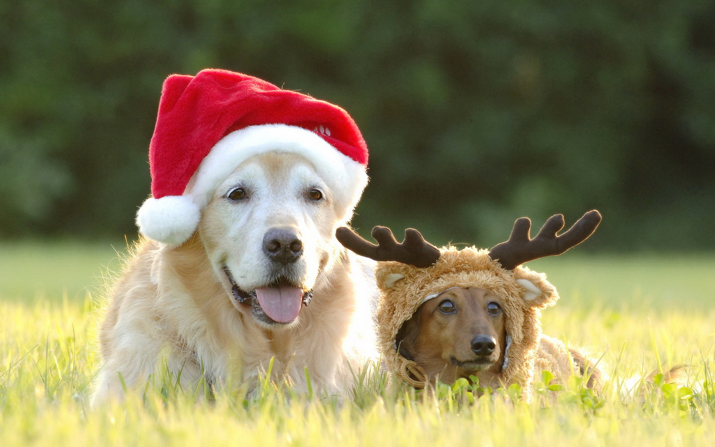 Dogs Photo Wallpaper photos of Download Funny Christmas Wallpaper 1440x900