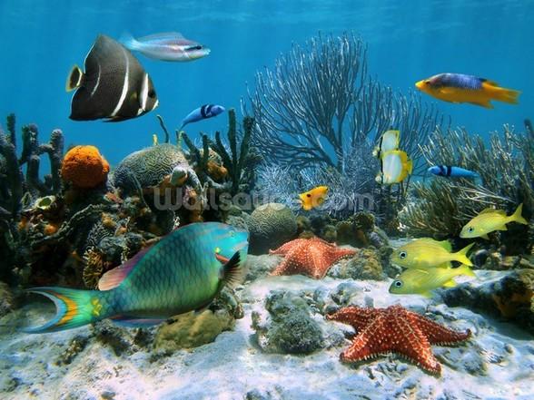 Coral Reef Wall Mural Coral Reef Wallpaper 588x441