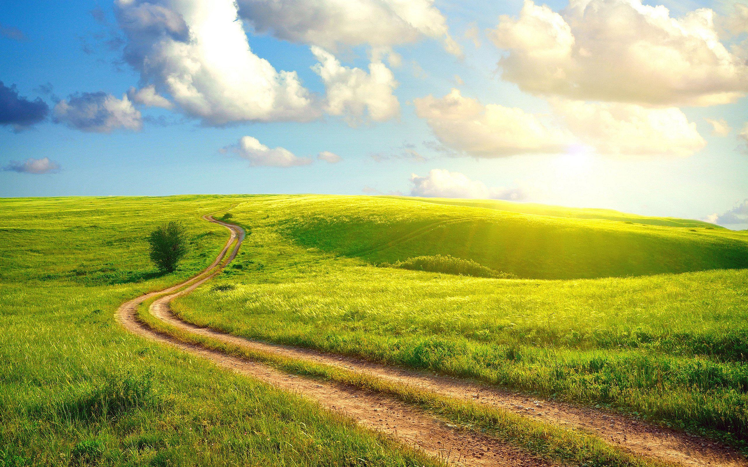 Summer day Meadow Wallpapers Pictures background mural 2560x1600