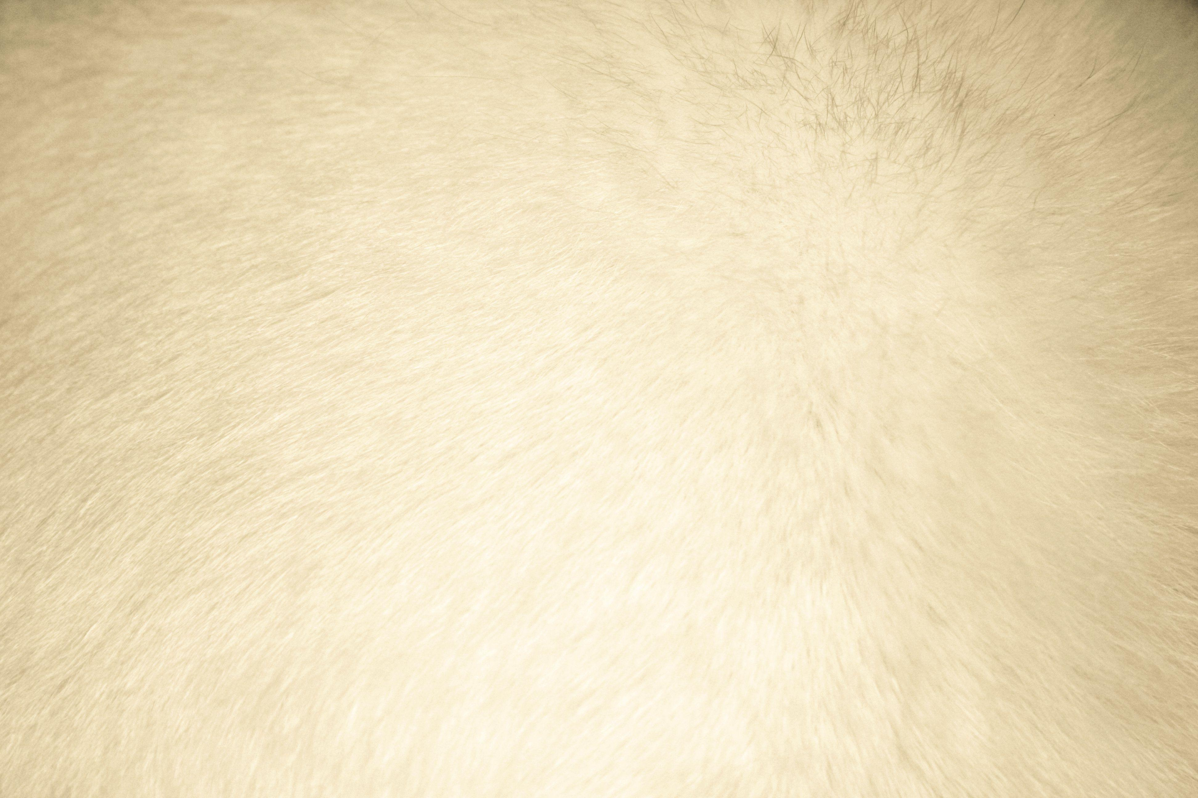 Cream Colored Backgrounds 3888x2592