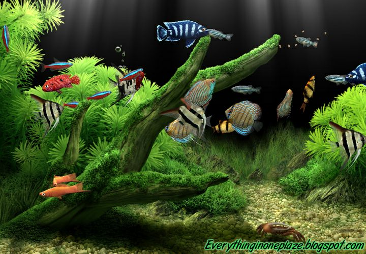 50 Free Fish Tank Wallpaper Screensavers On Wallpapersafari