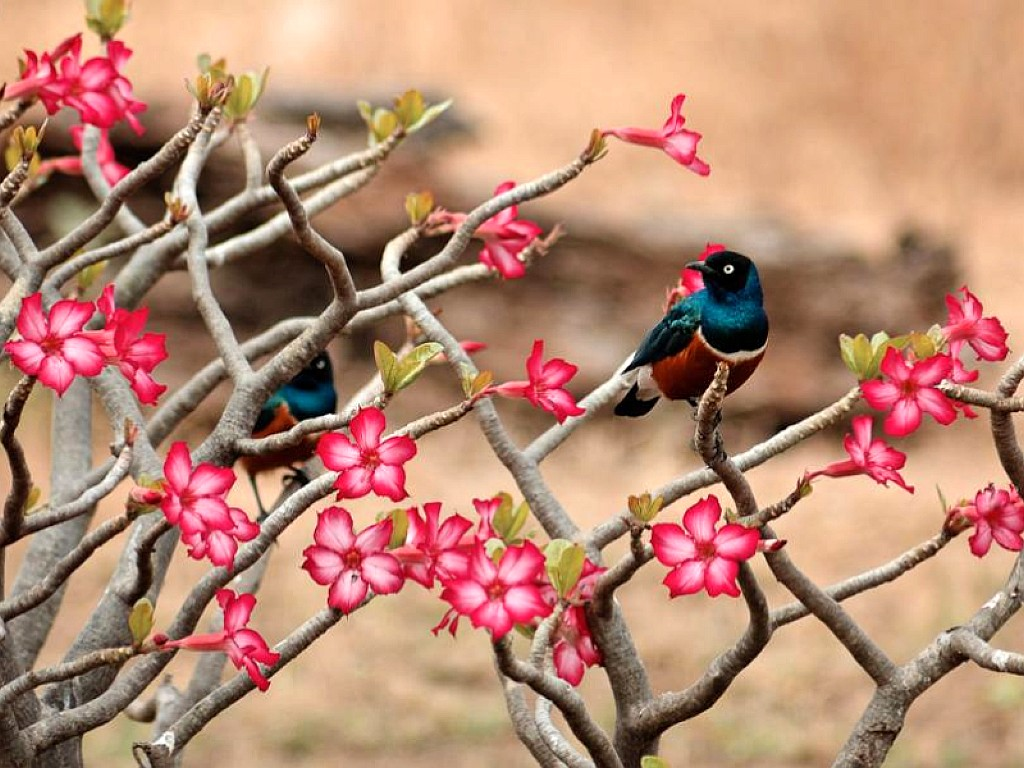 for flower lovers Flowers desktop wallpapers with small birds 1024x768