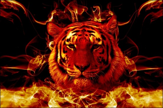 Awesome Fire Wallpapers Flaming tiger wallpaper 552x365
