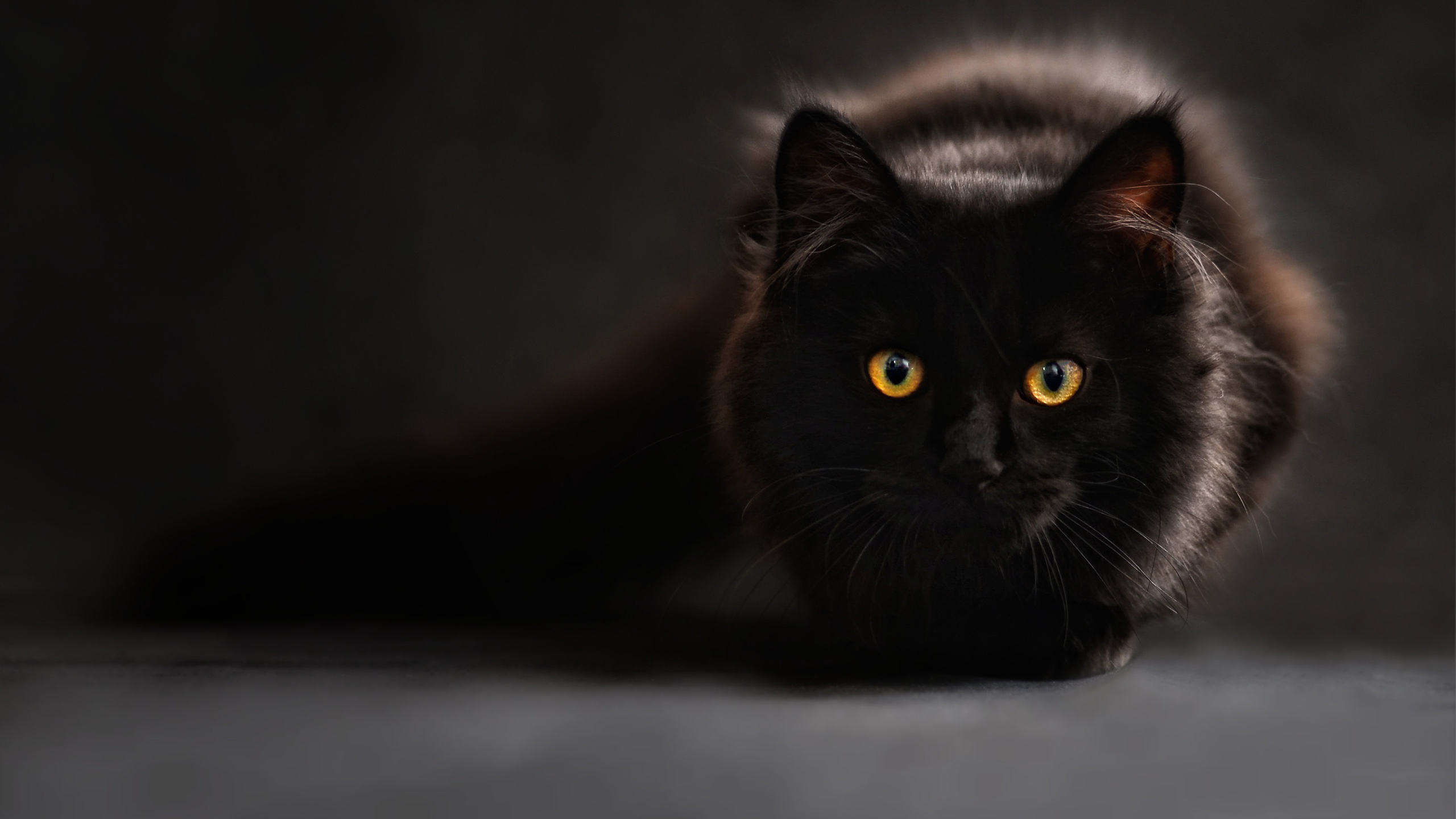 49 Black Cat Wallpaper For Android On Wallpapersafari